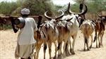 Giết một con bò, người đàn ông Ấn Độ bị đánh tập thể đến chết