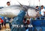 Vì sao xuất khẩu hải sản sang EU có xu hướng sụt giảm?