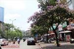 Hoa bằng lăng nở tím các con phố Hà Nội