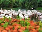 Khám phá 'Thế giới tinh nghịch' của muông thú ở Wanpi Safari