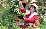 Chất lượng quả vải tốt, Lục Ngạn đẩy mạnh các nhóm giải pháp để tiêu thụ