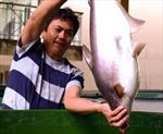 Hồi phục ngành cá tra - Bài 2: Vượt qua 'ám ảnh'