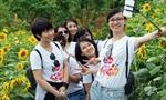 Giới trẻ đổ về Sa Pa chụp ảnh hoa hướng dương