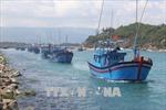 Sản lượng khai thác và nuôi trồng thủy sản tại Bình Định tăng cao