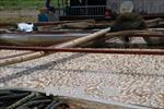 Khẩn trương triển khai các giải pháp ngăn ngừa tình trạng cá nuôi lồng bè chết