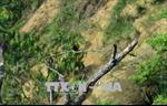 Sử dụng hệ thống các khu bảo tồn như là biện pháp thích ứng biến đổi khí hậu ở Việt Nam