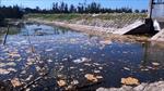 Công ty Tiến Đạt tại Hà Tĩnh bị phạt gần 4 tỷ đồng vì nuôi tôm xả thải gây ô nhiễm
