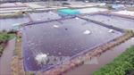 Nguy cơ ô nhiễm môi trường từ nuôi tôm siêu thâm canh