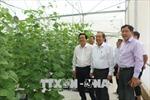 Phó Thủ tướng Trương Hòa Bình tham quan mô hình trồng dưa công nghệ cao tại Long An