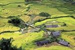 Ngất ngây với thảm lúa xanh mướt tại Thung lũng Mường Hoa