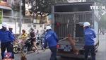 Quyết tâm dẹp nạn chó thả rông tại TP Hồ Chí Minh
