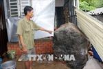 Đang ngồi ăn cơm trưa, tá hỏa vì hai tảng đá nặng 5 tấn rơi vào nhà