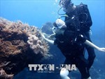 Tour lặn ngắm kỳ quan cổng Tò Vò dưới đáy biển hút khách