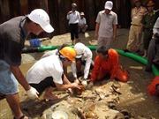 Trục vớt hàng trăm cổ vật từ tàu cổ