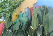 Trồng cây lấy lá thay túi ni lông ở Lạng Sơn