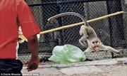 Kinh hoàng khỉ tấn công người ở sở thú