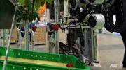 Nhật trình làng robot thu hoạch dâu tây