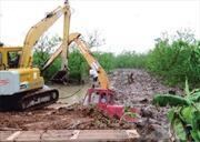 Xử nghiêm vụ phá rừng ngập mặn ở Tiên Lãng