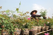 Nông sản Tết được mùa lẫn giá