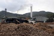 Dừng hoạt động nhà máy chế biến tinh bột sắn ở Thái Nguyên