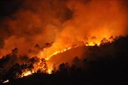 Cháy rừng thông ở Hạ Long