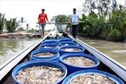 Kiểm soát chất lượng tôm xuất khẩu - Bài cuối