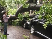 Hà Nội thu dọn hàng trăm cây đổ sau mưa lớn
