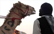 Có bằng chứng virus MERS lây từ lạc đà sang người