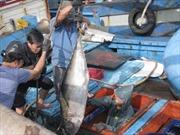 Trao thiết bị câu cá ngừ đại dương của Nhật Bản cho ngư dân