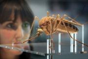 Biến đổi gen, ngăn chặn loài muỗi sinh sản