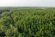 Lá chắn rừng ngập mặn đang suy giảm
