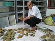 Phát hiện 24 di tích khảo cổ thời tiền sử tại Gia Lai