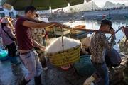Một ngày mới ở chợ cá Hạ Long