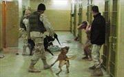 Mỹ siết chặt an ninh trước giờ 'vạch áo CIA'