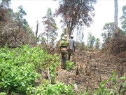 Lâm Đồng thu hồi 164 dự án thuê đất rừng