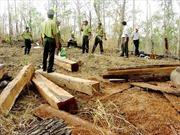 70 lâm tặc hành hung cán bộ bảo vệ rừng