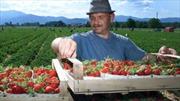 Nông dân châu Âu điêu đứng vì Nga cấm nhập khẩu