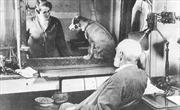 Ivan Pavlov - người tìm ra định luật 'phản xạ có điều kiện'