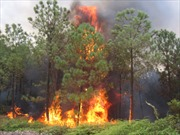 Cháy rừng Indonesia gây ô nhiễm Singapore