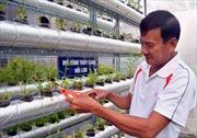 Đưa mô hình trồng rau thủy canh ra Cù Lao Chàm