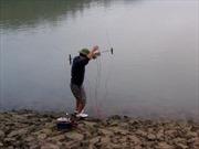 Đánh bắt cá bằng xung điện, hậu quả khôn lường