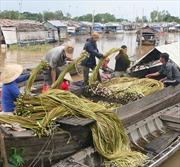 Chợ đặc sản vùng biên mùa nước nổi