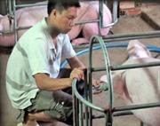 Đề nghị xử phạt cơ sở bơm nước vào lợn để tăng trọng lượng