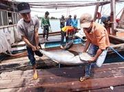 Ngư dân chưa tiếp cận được vốn vay đóng mới tàu