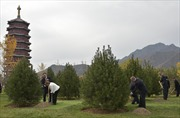 Lãnh đạo APEC trồng cây thắt chặt tình hữu nghị