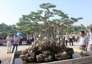 Festival Sinh vật cảnh TP Thanh Hóa lần thứ 2: Ý nghĩa nhân văn của nghệ thuật cây cảnh