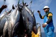 Làm rõ mô hình thí điểm khai thác cá ngừ đại dương tại Bình Định