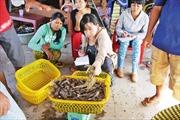 Liên kết vùng Đồng bằng sông Cửu Long: Khai phóng tiềm năng của vùng