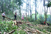 Lâm tặc lộng hành phá rừng đầu nguồn Yên Thế