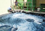 Ô nhiễm môi trường nghiêm trọng ở Sóc Trăng